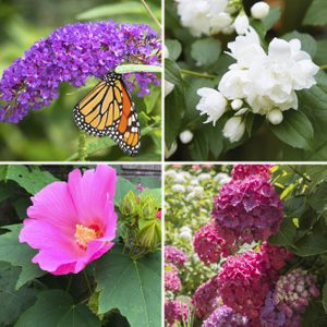 Top 10 Summer Flowering Shrubs for Full Sun