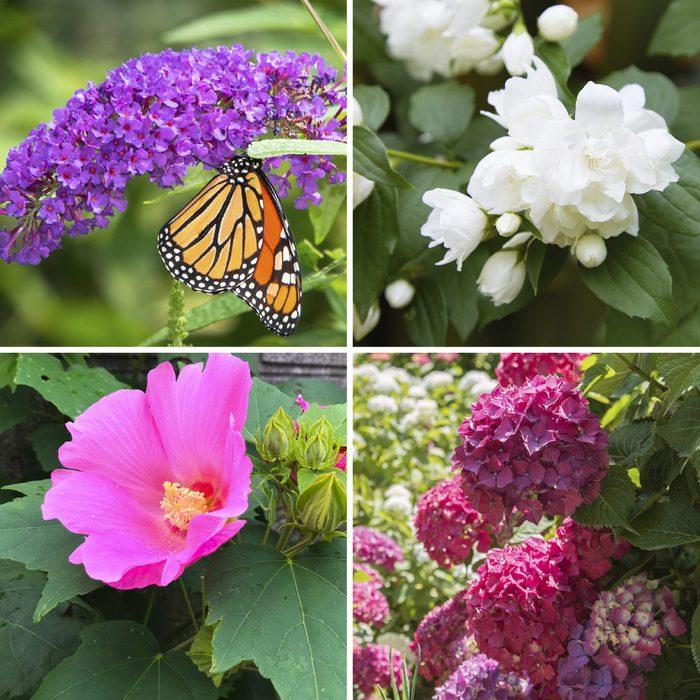 Top 10 Flowering Shrubs 1200x1200