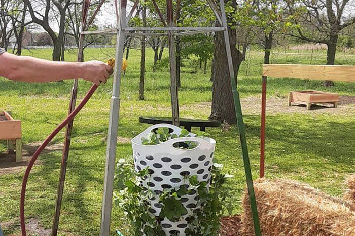 Laundry Basket Strawberry Planter