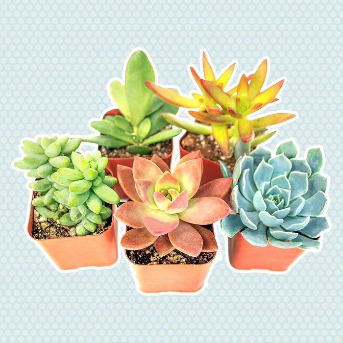 houseplants for sale Succulent Plants Fully Rooted Planter