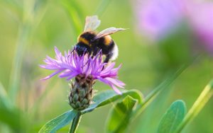 6 Ways You Can Help Save the Bees