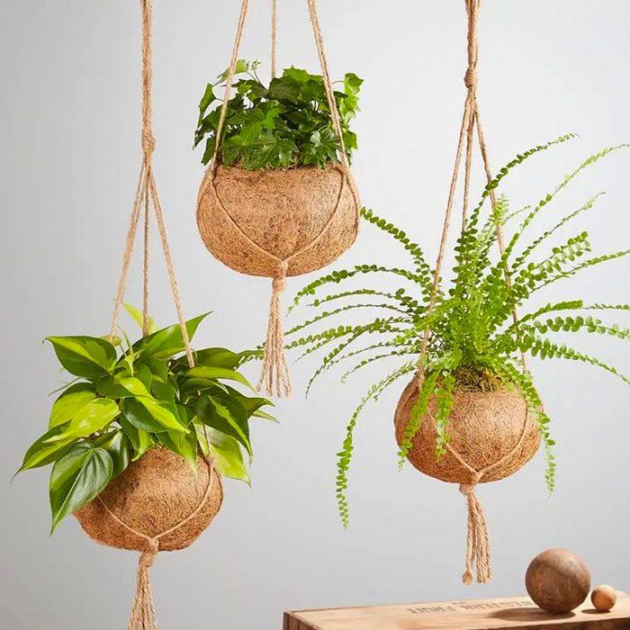 Kokedama Plant houseplants for sale