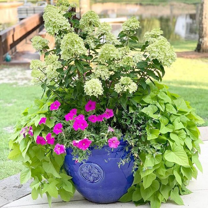Landscaping With Pots 162466295 792698505005721 3655325302755838715 N