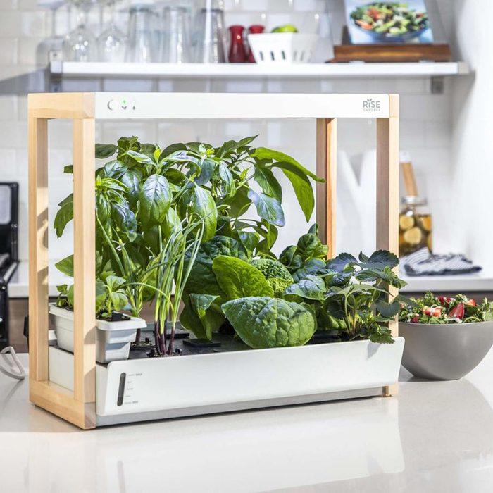 houseplants for sale Personal Indoor Garden