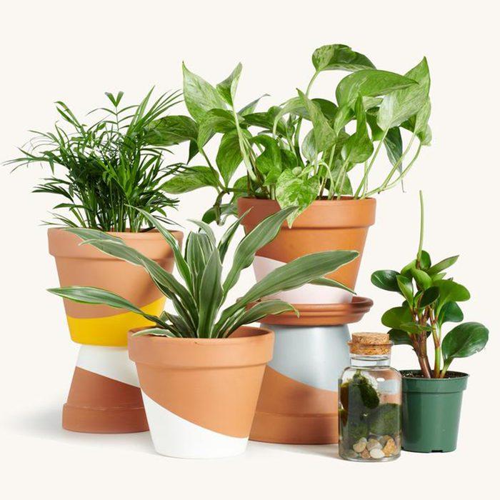 houseplants for sale Plant Subscription Box