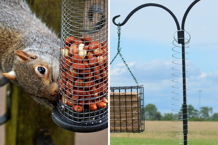 Squirrel Slinky Hack Showing How to Keep Squirrels Away from Bird Feeders