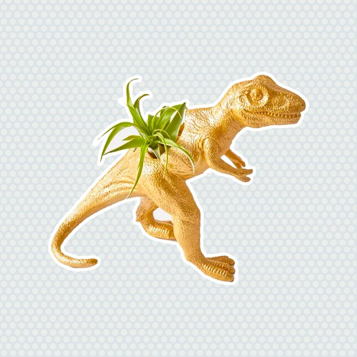 The Rex houseplants for sale