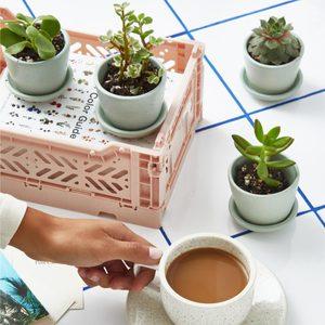 6 Houseplant Subscription Boxes That'll Bring You Joy