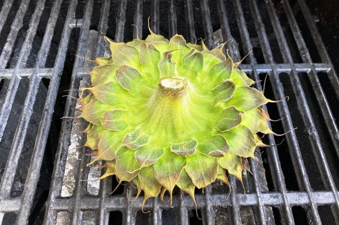 Showing How To Grill Sunflower