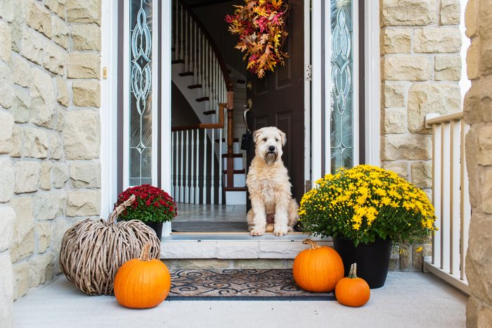 fall decor surrounding an open front door with a dog sitting in the doorway; an autumn wreath hangs on the door and pumpkin and fall flowers decorate the doorstep